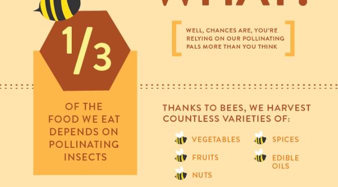 Bees infographic
